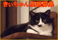 きぃちゃん募集バナー2.png